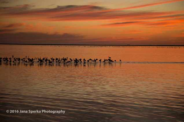 Flamingos_4web
