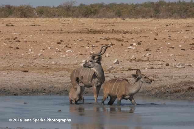 Kudu-Familyweb