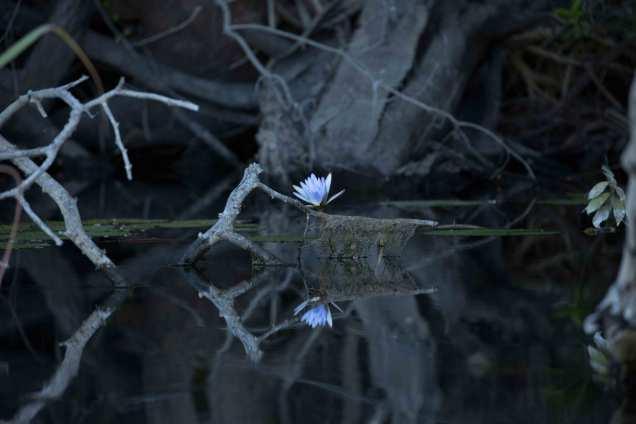 Lilyweb