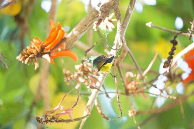 Sunbird_1web