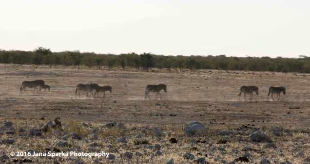 Zebra-Search-for-Waterweb