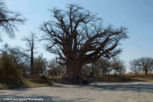 Baobabweb
