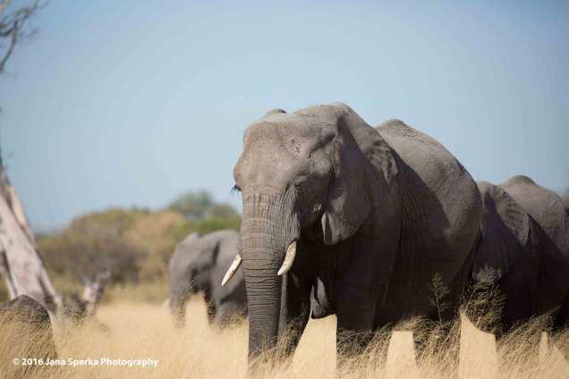 Elephant-maybe-it's-maybelineweb