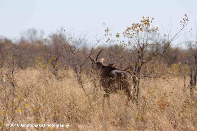 Unicorn-Roan-Antelopeweb