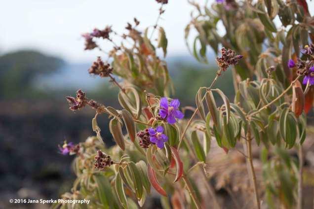 Alpine-flowersweb
