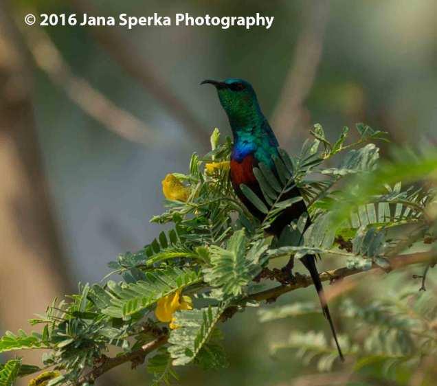Birds_7web