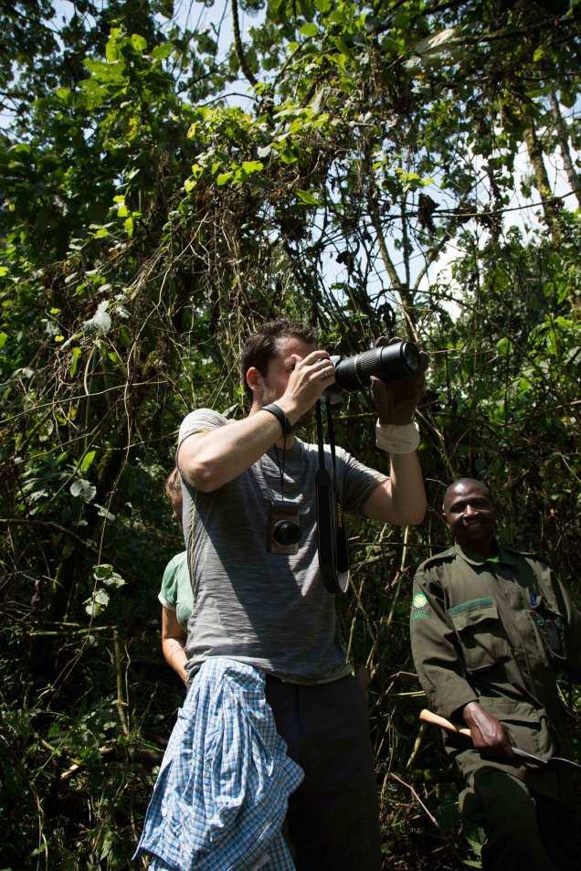 gorilla---guideweb