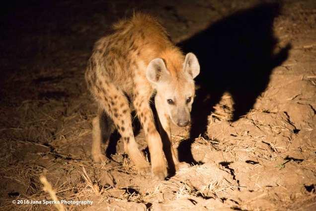 hyenaweb