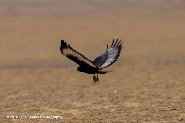 bird-huntweb
