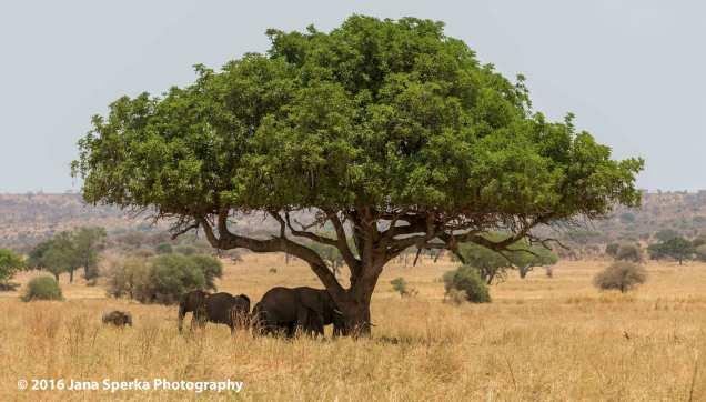 ellie-shade-treeweb