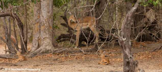 new-born-impalasweb