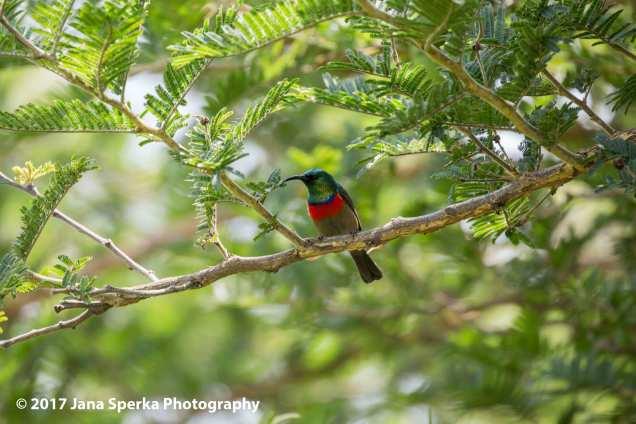tiny-sunbird-maybeweb