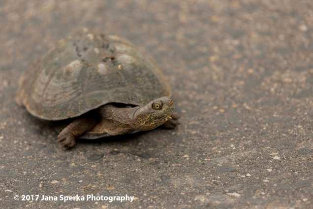 tortoiseweb