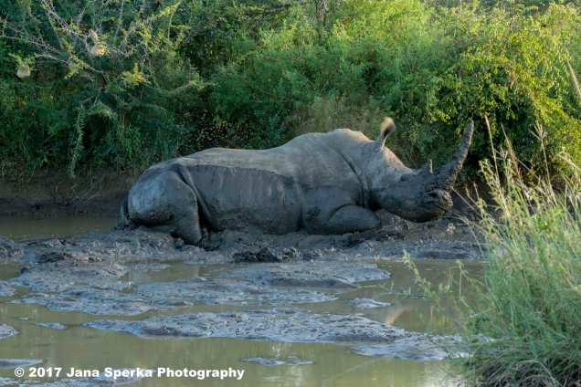 happy-rhinoweb