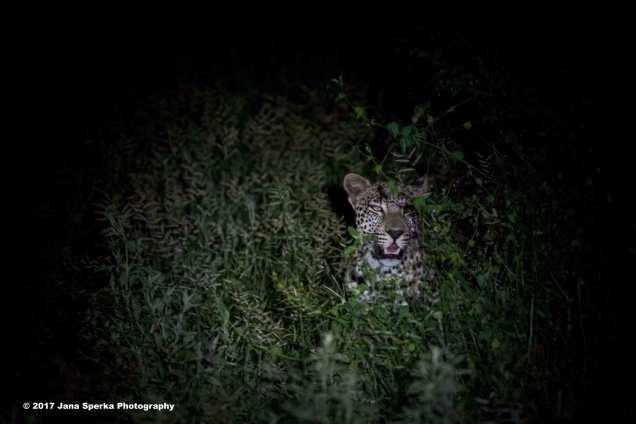 leopard-camp_1web