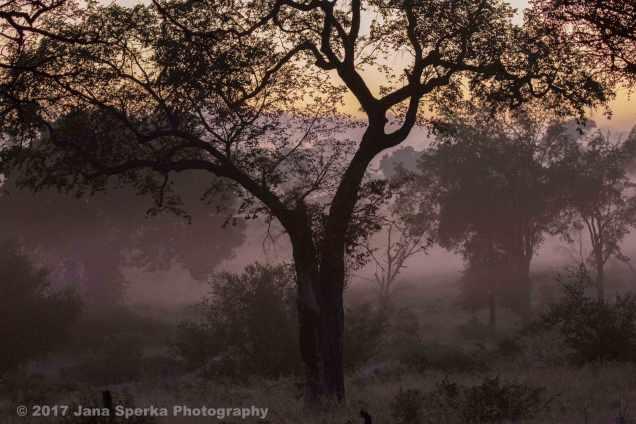 morning-mist_1web