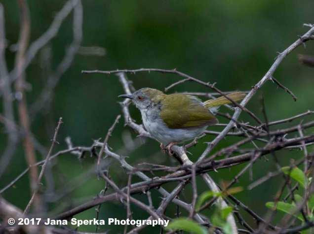 puffy-sunbirdweb