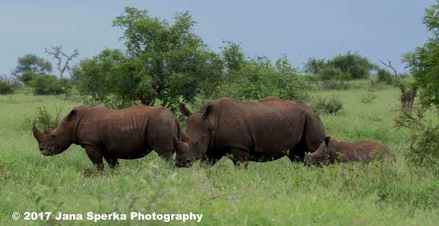 rhino-and-baby_1web