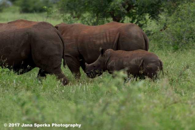 rhino-and-baby_2web