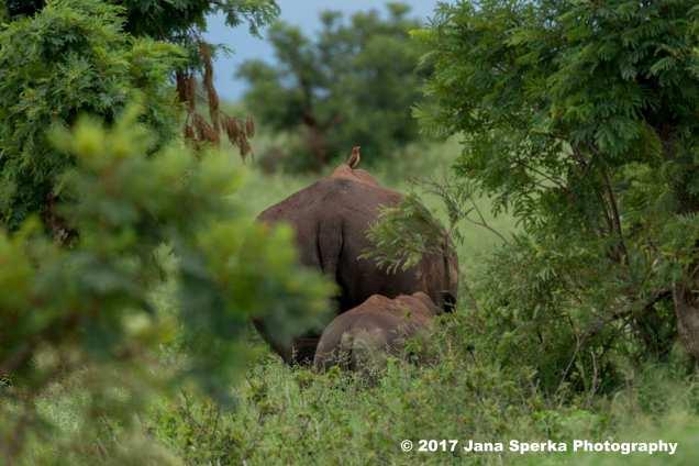 rhino-and-baby_3web