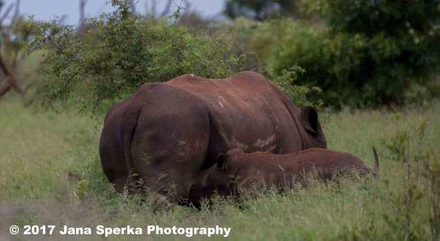 rhino-and-baby_4web