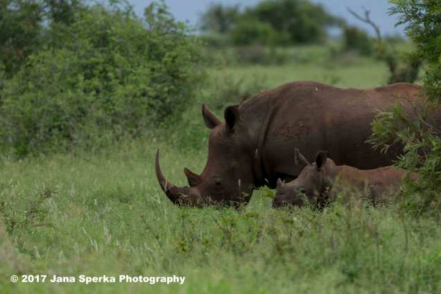 rhino-and-babyweb