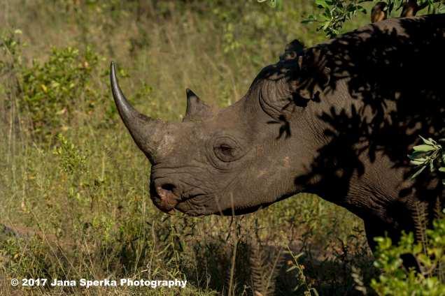 rhino-black_2web