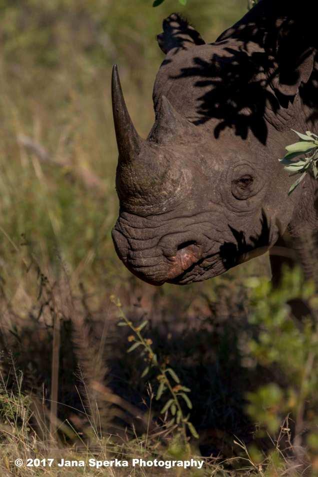 rhino-black_3web