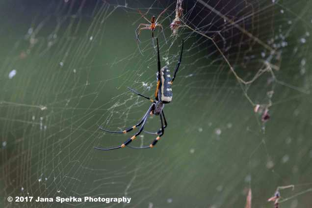spider-and-mate_1web