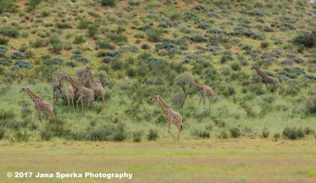 Giraffe-Journeyweb