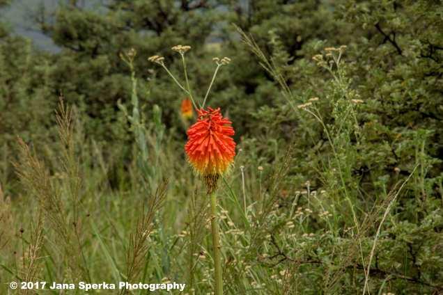 Hotpocker-flowerweb