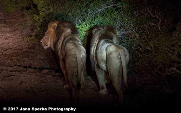 Lions-Brothersweb