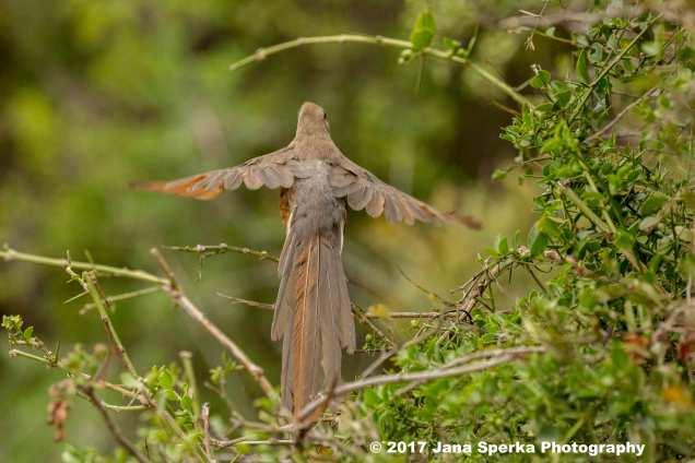 Mousebird-Flightweb