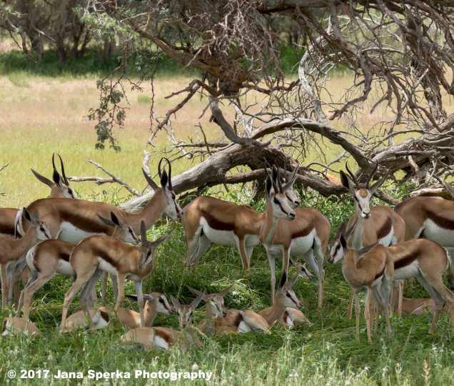 Springbok-baby-nap-timeweb