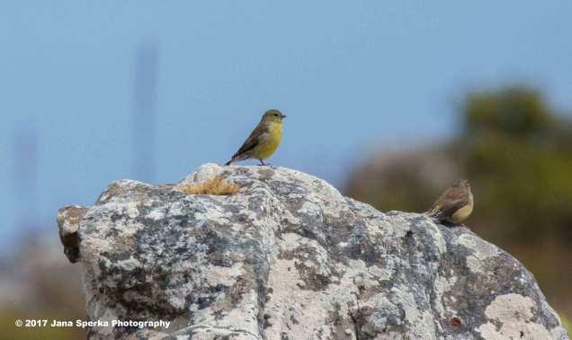 Unknown-Birdweb